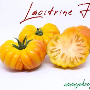 Lacitrine F1