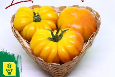 Najnowsza odmiana pomidora typu heirloom już w sprzedaży…