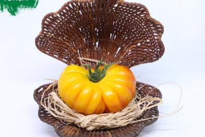 Pragniemy Państwu przedstawić kolejną  nowość w naszej ofercie. Jest to  pomidor…
