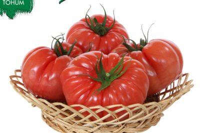 Kolejna propozycja od Yuksel Tohum Polska, tym razem pomidor  w typie heirloom…